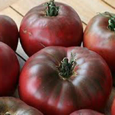Tomato CHEROKEE PURPLE HEIRLOOM UNUSUAL COLOUR SWEET TOMATO 25 SEEDS