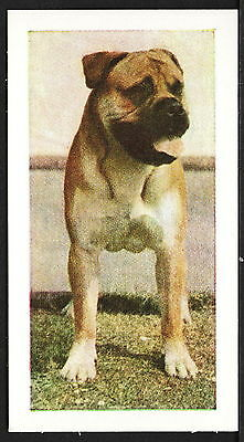 """Bull Mastiff """"Dogs"""" Series, Card No. 30, 1961 Issue by Hornimans Tea"""