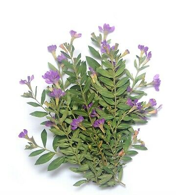 Pressed Flowers Organic Small Purple dried Flowers with Leafs DIY Floral Decors