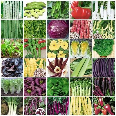 VARIETIES vegetable Seeds Heirloom NON-GMO Top Quality