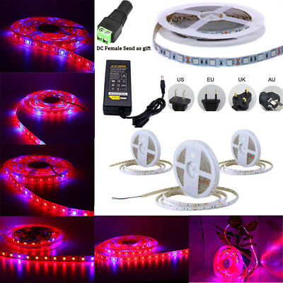 5M 5050 LED Strip Grow Light Lamp Full Spectrum For Greenhouse Plant 12V Power