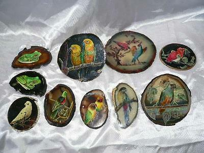 10 x Bird Parrot Frog Paintings on  polished agate ? semi precious sliced stone