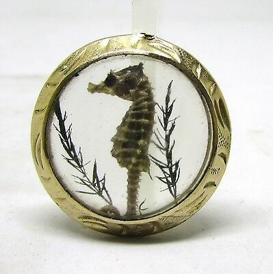 Neat Vintage Real Hippocampus Erectus Encased In Glass_Gold Tone Frame Seahorse