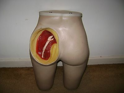 Vintage Medical Teaching Supply/Aide..Rubber....Female Form Gluteus Maximus