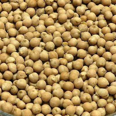 CHICKPEA SEEDS Cicer arietinum DRIED Herb, Loose Natural Herbs 50g