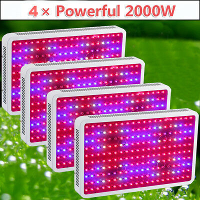 4 × 2000W LED Grow Lights Full Spectrum Lamp for Plants Hydroponic Indoor Garden