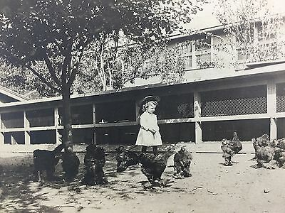 Antique Photograph of Little Girl on Farm Feeding Chickens Late 1800s Sweet!