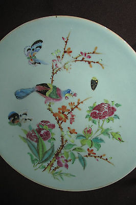 Antique Chinese PLATE Celadon Famille Rose Bird & Butterfly Flowers Signed 26CmW