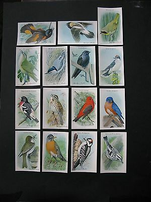 Vintage Arm & Hammer Baking Soda Trade Cards Useful Birds of America 9th Series