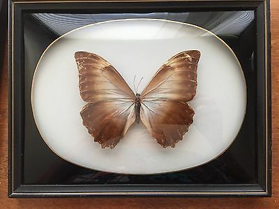 Vintage Set Framed & Mounted Real Butterflies in bubble glass frames from Brazil