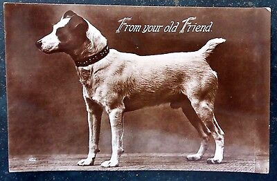"1932 Real Photographic Postcard Jack Russell dog ""From your old friend"""