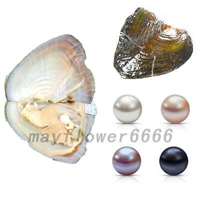 5PCS Individually Wrapped Freshwater Oysters With Large Pearls 0.75-8MM Gift New
