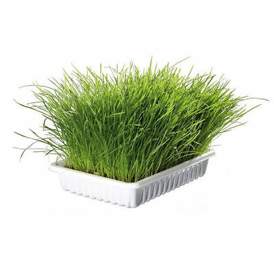 Trixie 100% Natural Soft Cat Kitten Grass In Tray - Grow Your Own