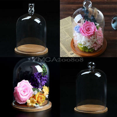 1x Glass Display Cloche Bell Flower Jar Dome Immortal Preservation + Wooden Base