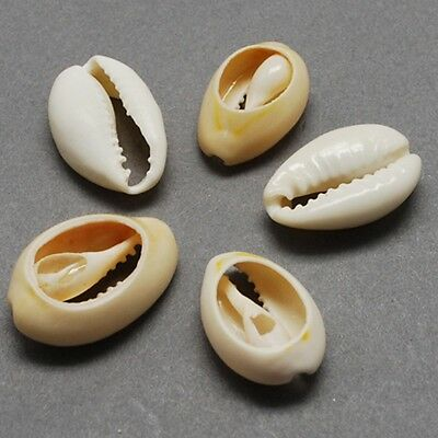 100 x Natural Sea Shell Beads Cowry Cowrie Tribal  Craft 20-22mm(BSHE-Q296-1)