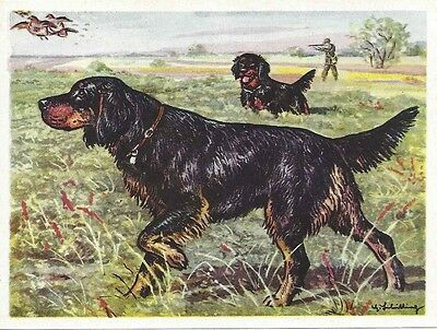 Original 1952 Dog Art Print Austria Tobacco Bildwerk Trade Card GORDON SETTER