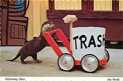 Otter at Seal Show Sea World San Diego CA Aurora OH Orlando FL Postcard