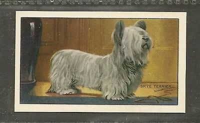 Rare 1936 UK Dog Art Full Body Gallaher Series A Cigarette Card SKYE TERRIER