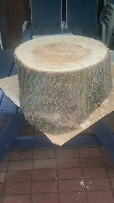 Natural Large  Solid Tree / Log Trunk