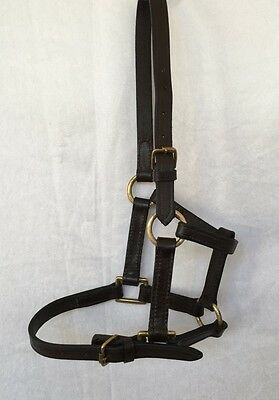 Leather Foal Halter with Brass Mounts