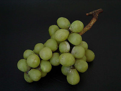 VINTAGE EARLY CARVED STONE ALABASTER GREEN GRAPES BUNCH MARBLE FRUIT (1of5)