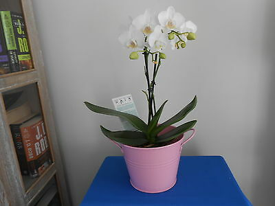 Florist/plant  Container Pink Tin With Handles