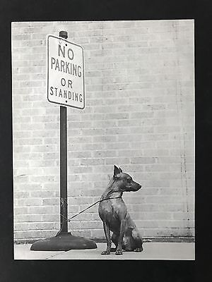MIN PIN DOG CAN'T READ SIGN Original Book Print Photographed by Walter Chandoha