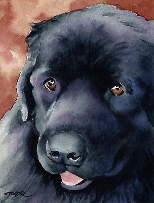 NEWFOUNDLAND Painting Dog 8 x 10 ART Print Signed by Artist DJR