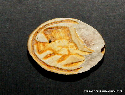 Ancient Egyptian Cowroid Amulet Depicting A Fish On Base; 1570-1293Bc!!