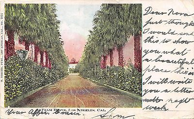 Postcard CA Los Angeles Palm Drive Posted 1904 Vintage Undivided California PC