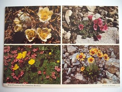 Wild Flowers Of The Canadian Rockies Banff Alberta Canada Photo Harmon Postcard
