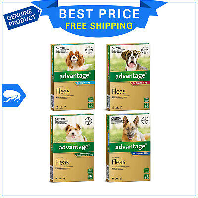 ADVANTAGE for Dogs All Sizes 6 Pipettes + FREE 2 Pipettes Dog Flea treatment