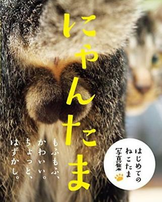 Picture Book for the Cat Testicles 'Nyantama' From Japan