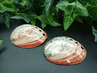 Abalone Shell Red (polished Exterior) Mother of Pearl Sea-Shells,Pair of