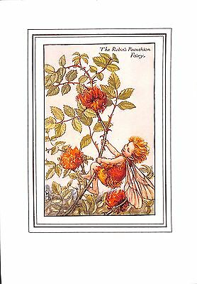 Flower Fairy print.1923.Botanical.Robin's Pincushion.Cicely Mary Barker.Antique