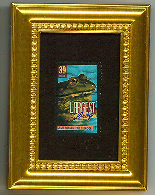 American Bullfrog Largest Glass Framed Collectible Postage Micro Masterpiece!