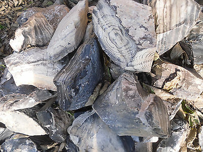 Zebra Flint Wyoming  AKA Tiger Chert, 20-30 LBS (LARGE PRIORITY FLAT RATE BOX