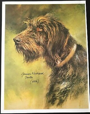 GERMAN WIREHAIRED POINTER DOG Vintage Full Page Art Print by Rien Poortvliet