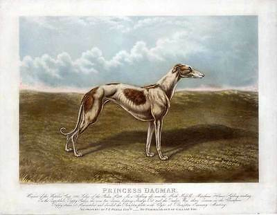 Windhund-Greyhound-Hund-Hunde-Tiere-Aquatinta-Edwin H. Hunt 1881 Folio - selten!