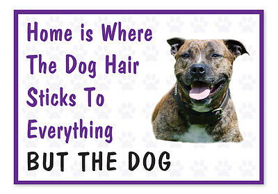 Home is Where The Dog Hair- Funny Staffy Bull Terrier Vinyl Car Decal Sticker
