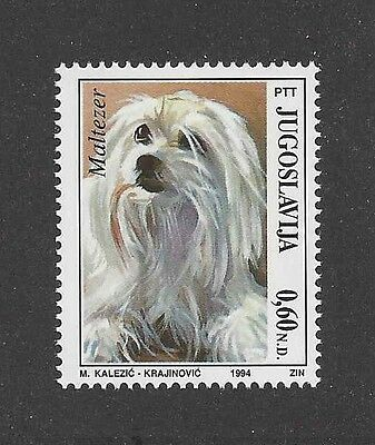 Dog Art Artwork Head Study Portrait Postage Stamp MALTESE Yugoslavia 1994 MNH