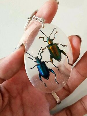 Beetle Bug Blue Green Wing Taxidermy Real Insect in Clear Resin keyring Animals