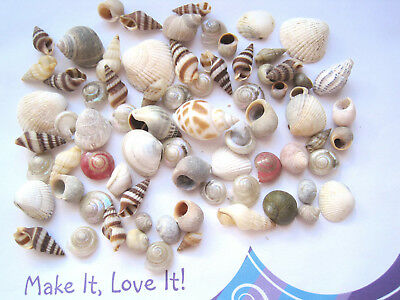 75 x MIXED SEASHELLS for Craft 7mm to 20mm Sea Shells Grey Pink Brown Striped