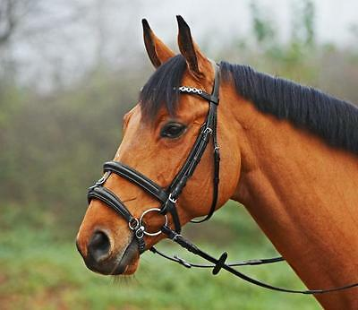 Busse riding halter HO English Meinhard Combined Black, Soft Lined