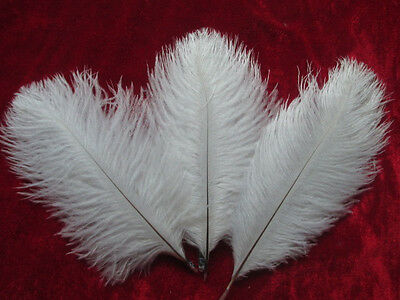 Beautiful! 10pcs white ostrich feathers 6-8 inches / 15-20 cm free delivery
