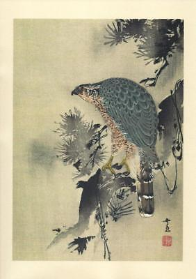 Japanese Reproduction Woodblock Bird of Prey on a Branch  on A4 Parchment Paper