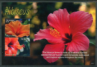 Gambia 2017 MNH Hibiscus Flower 2v S/S Flowers Flora Nature Stamps
