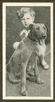 1936 UK Dog & Friend Child Photo Ritson Carreras Cigarette Card IRISH TERRIER