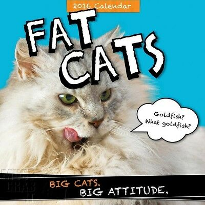 2016 Full color wall Calendar FAT CATS Big cats big attitude 12x12