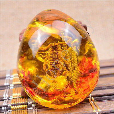 Insect Stone Real Scorpions Inclusion Resin Amber Baltic Pendant Necklace Gift